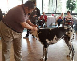 The Mobile Zoo paid a visit to Arcadia Gardens with several animals